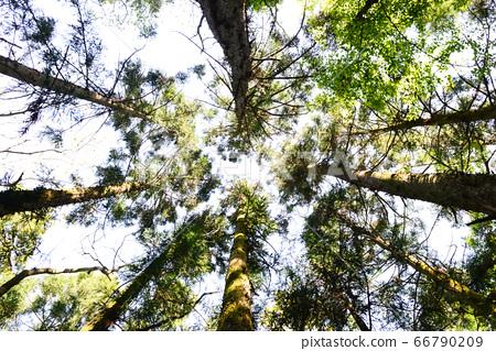 森林 66790209