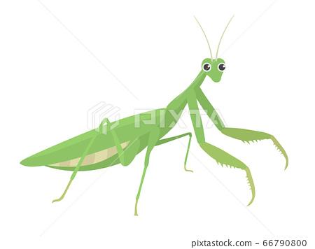 Mantis illustration 66790800