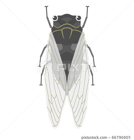 Illustration of cicada 66790805