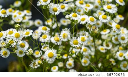 美麗的花朵在鄉下 66792076