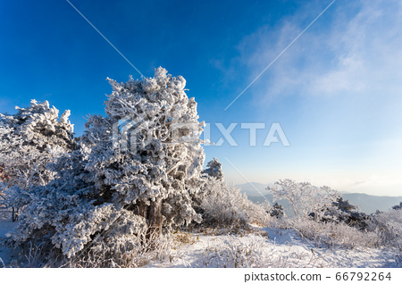 Deokyusan Snow Scenery ...積雪覆蓋的注意力和球狀樹木 66792264