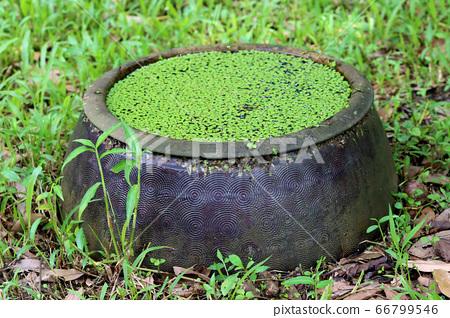 一罈小浮萍植物 66799546