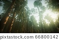 Redwood Forest Foggy Sunset Scenery 66800142