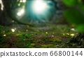 Sunlight rays pour through leaves in a rainforest 66800144