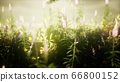 wild flowers in the field 66800152