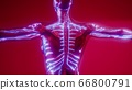 Blood Vessels of Human Body 66800791