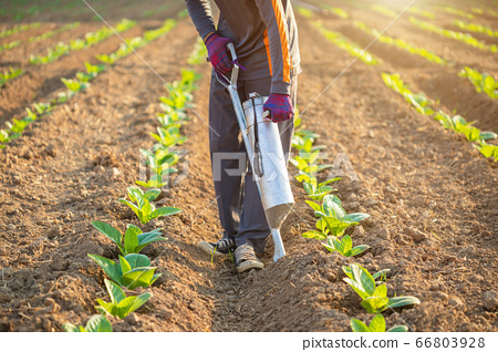 Farmer working in the field and giving fertilizer 66803928