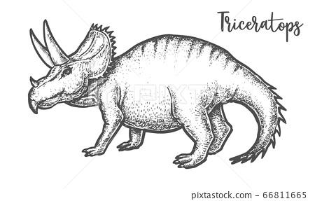Hand drawing Triceratops dinosaur vector sign tatoo 66811665