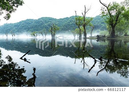 물안개피는 로하스공원 66812117