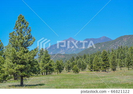 The view of Mount Humphreys and its Agassiz Peak. One of the San Francisco Peaks in the Arizona Pine Forest. Near Flagstaff, Coconino County, Arizona USA. 66821122