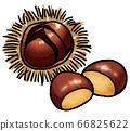 Hand drawn vector illustration of chestnut 66825622