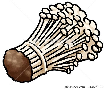 팽이 버섯의 손 벡터 일러스트 66825937