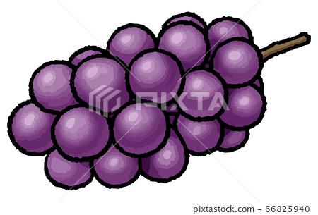 葡萄手繪製的矢量圖 66825940