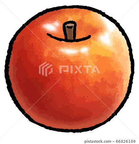 手繪矢量插畫的蘋果(1) 66826189