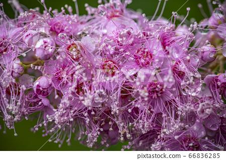 한국의 들꽃 66836285