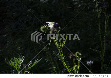 한국의 들꽃 66836474
