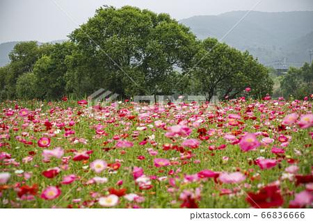 한국의 들꽃 66836666