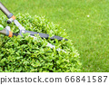 Hands are cut bush clippers in garden 66841587