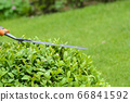 Hands are cut bush clippers in garden 66841592