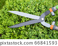 Hands are cut bush clippers in garden 66841593