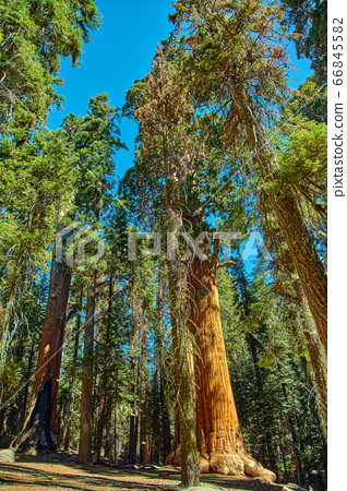 Sequoia National Park in California, USA. 66845582