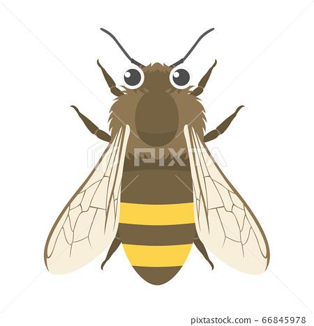 꿀벌의 일러스트 66845978