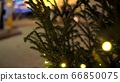 Circular movement of camera around row of Christmas trees decorated yellow luminous garlands on background of Christmas market blurry 66850075