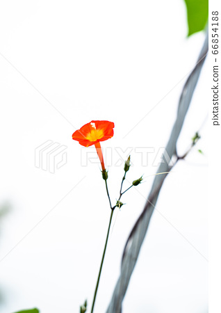 한 송이 꽃 66854188