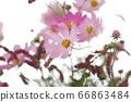 꽃 66863484