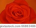 꽃 66863486
