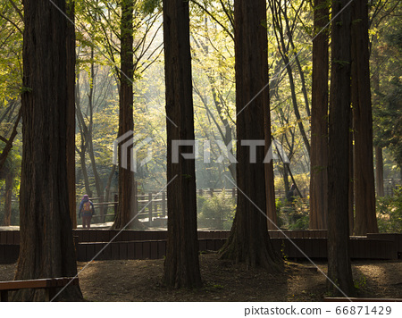 한국 인천시 남동구 인천대공원 가을 66871429