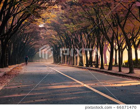 한국 인천시 남동구 인천대공원 가을 66871470