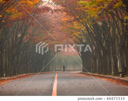 한국 인천시 남동구 인천대공원 가을 66871533