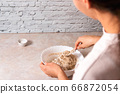 process of baking health bread at home. closeup woman hands kneading dough from rye flour on marble countertop in bright kitchen 66872054