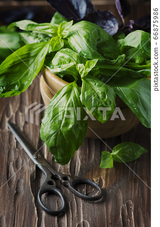 Bunch of fresh basil on the vintage table 66875986