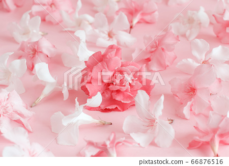 Pink flowers on light pink background 66876516