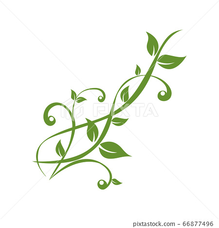 green plants tendril on white background 66877496