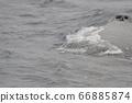 座頭鯨的鼻子(沿海近海群島/沖繩縣) 66885874