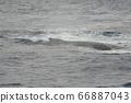 駝背鯨的背(凱拉馬群島內陸/沖繩縣) 66887043