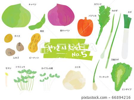 蔬菜插圖集5 66894216