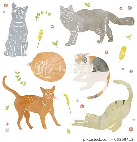 貓的水彩插圖 66899412