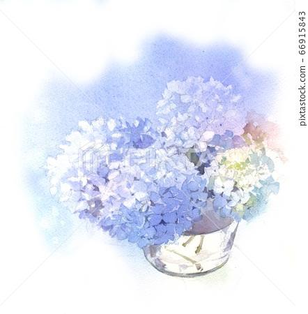 水彩繡球花 66915843