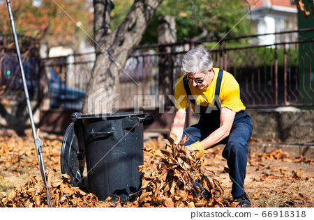 Senior collecting fallen autumn leaves in the yard 66918318