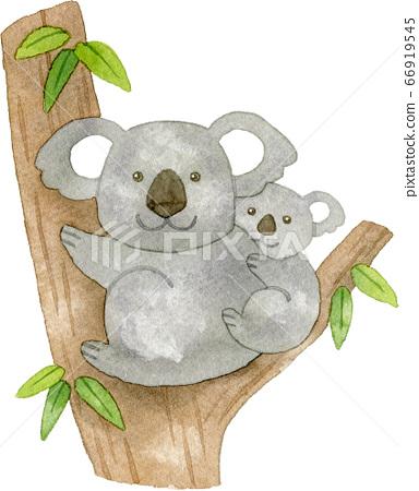 桉樹和親子考拉 66919545
