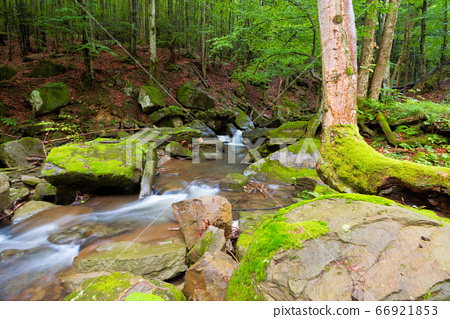 water stream among the rocks in the forest. summer 66921853