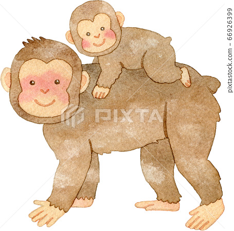 Parent and child of monkey 66926399