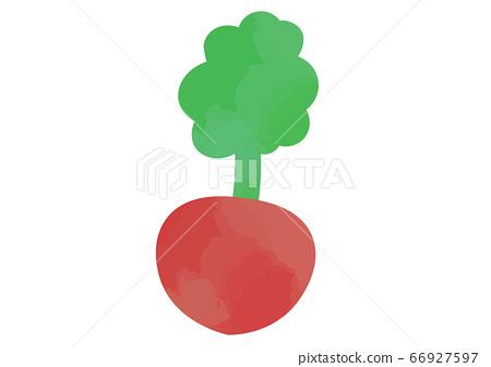 Illustration of red turnip 66927597