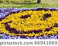 Smiley flowers 66941669