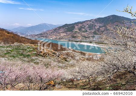 매화마을 섬진강 풍경 66942010