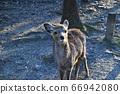 Cute deer 66942080
